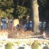 Buck in yard.jpg